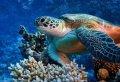 Marmaris Scuba Diving