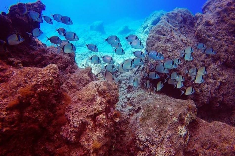 See the Underwater World on a Scuba Diving Tour from Kemer, Side and Alanya
