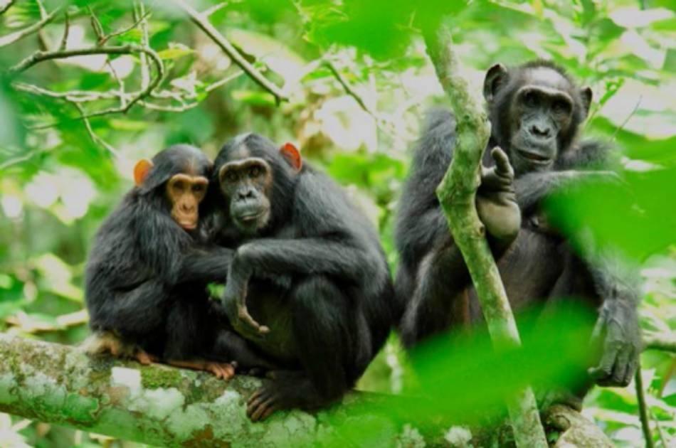 13 Day Gorilla and Safari Tour
