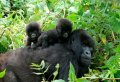 3 Day Gorilla Tracking in Bwindi from Kigali