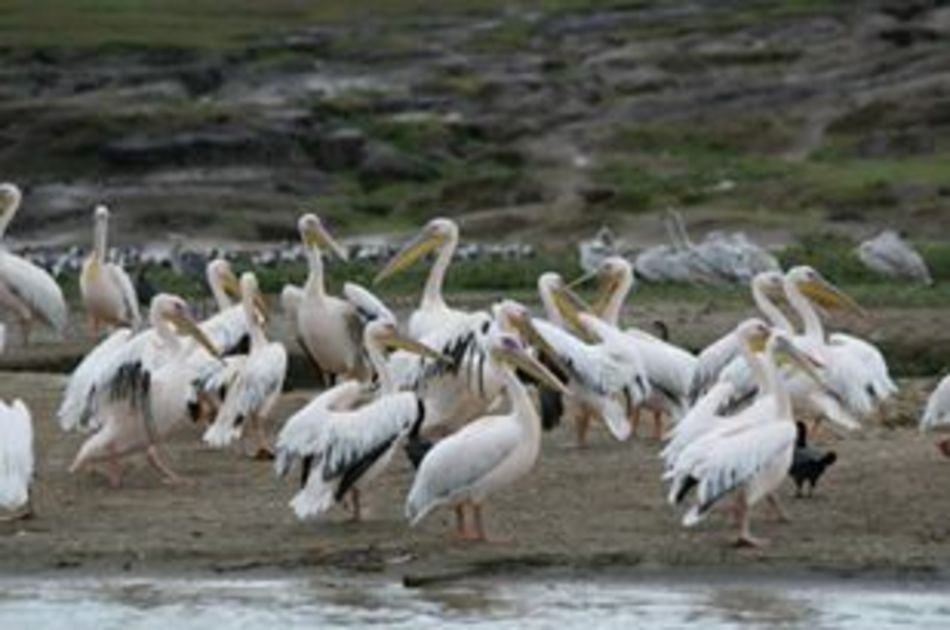 3 Day Guided Tour to Queen Elizabeth National Park