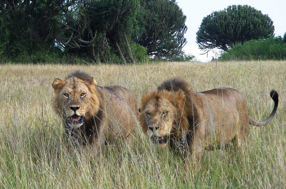 3 Days Murchison Falls Big 5 & Big Cats Tour