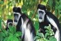 4-Day Gorillas & Golden Monkey tracking tour  From Kigali to Bwindi