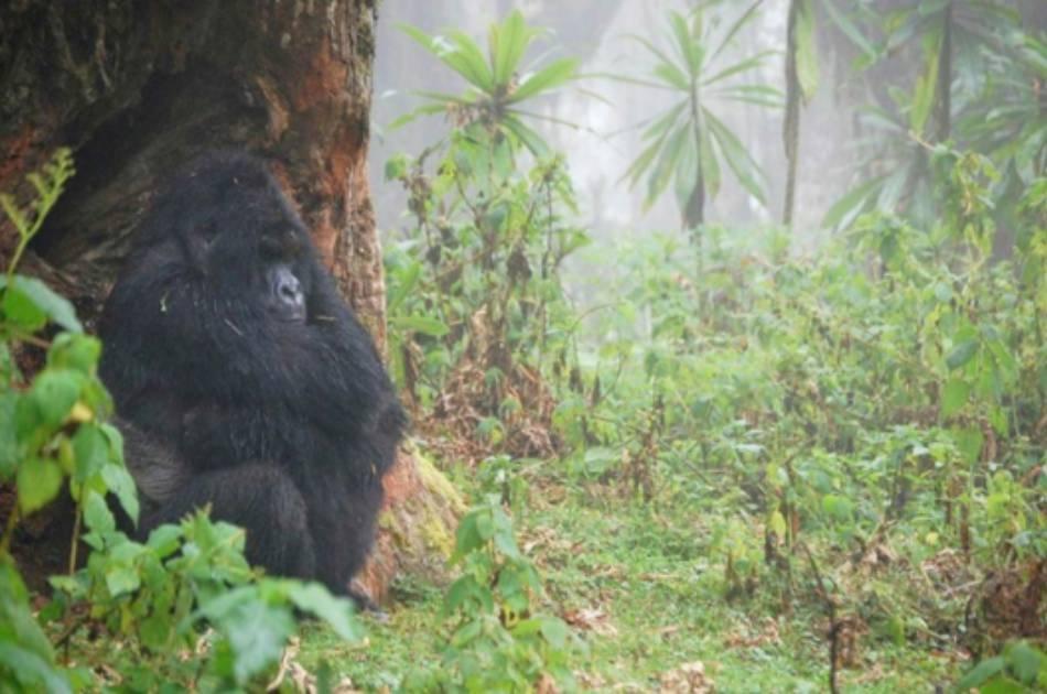 4 Day Mountain Gorillas Tour