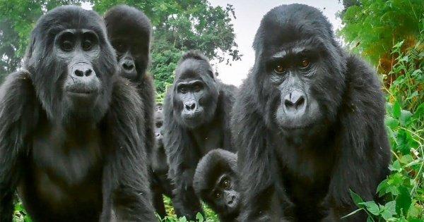 4 Days Bwindi Safari Tour