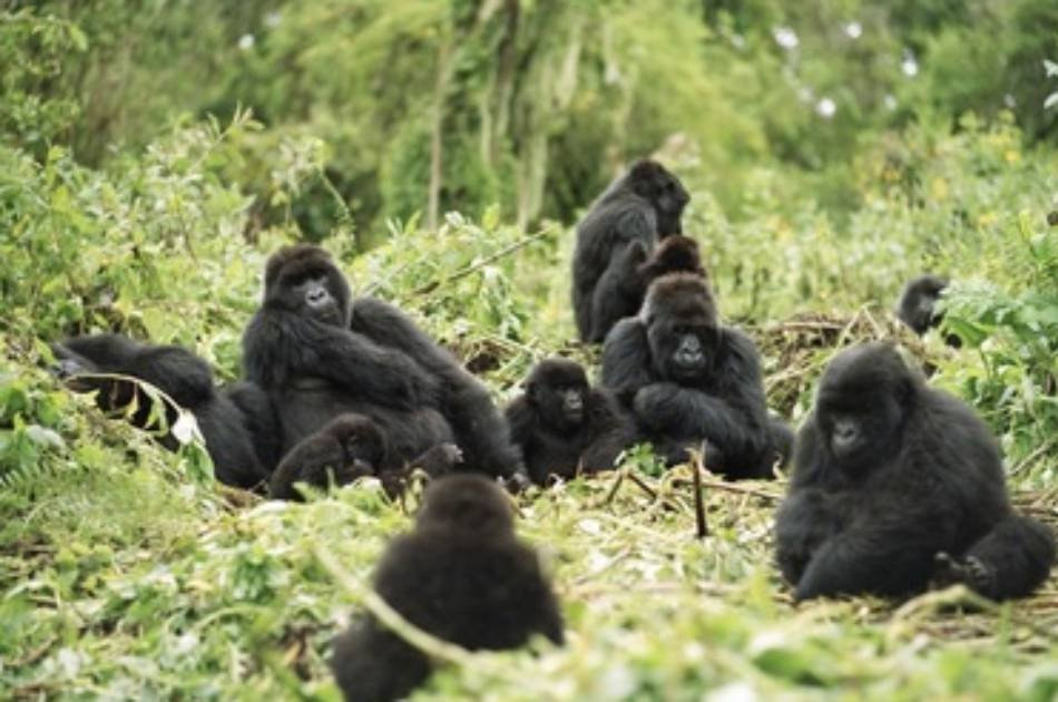 6 Day Gorilla Mountain Tour