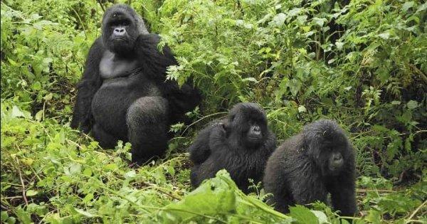 6-day Private Uganda Primate Explorer