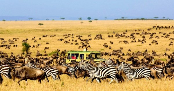 6 Days Wildlife Adventure At Kidepo And Murchison Falls National Park