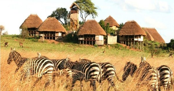 8 Days Game Adventure Safari Kidepo Valley  National Park And Sipi Falls