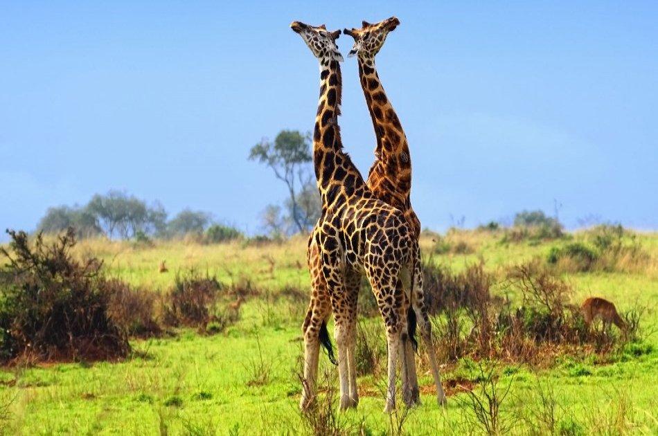 9 Day Safari From Kampala