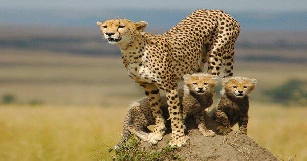 9 Days Uganda Safari Encounter