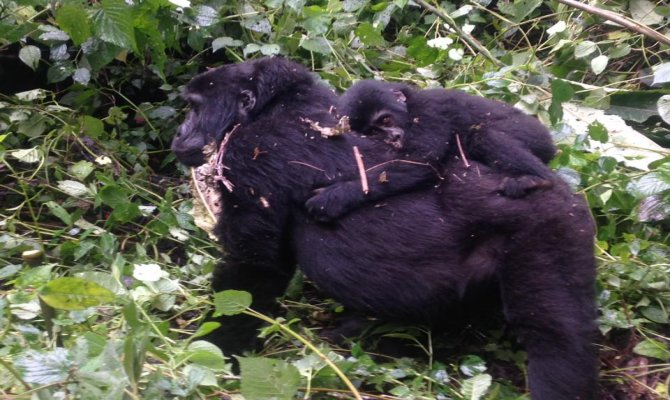 10 Day Epic Gorilla & Wildlife Safari