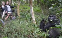 Gorillas, Chimpanzees and Wildlife of Uganda and Rwanda Tour