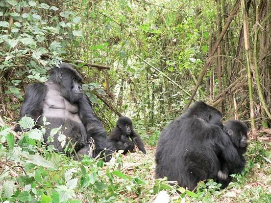 6 Days With Uganda Gorillas in Style