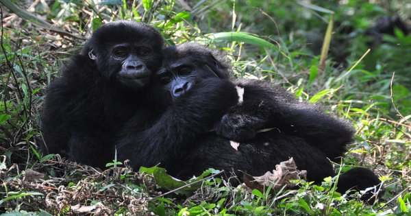 6 Days With Uganda Gorillas in Style