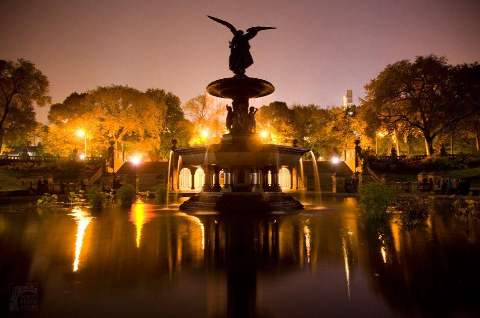 Central Park Photo Safari at Night