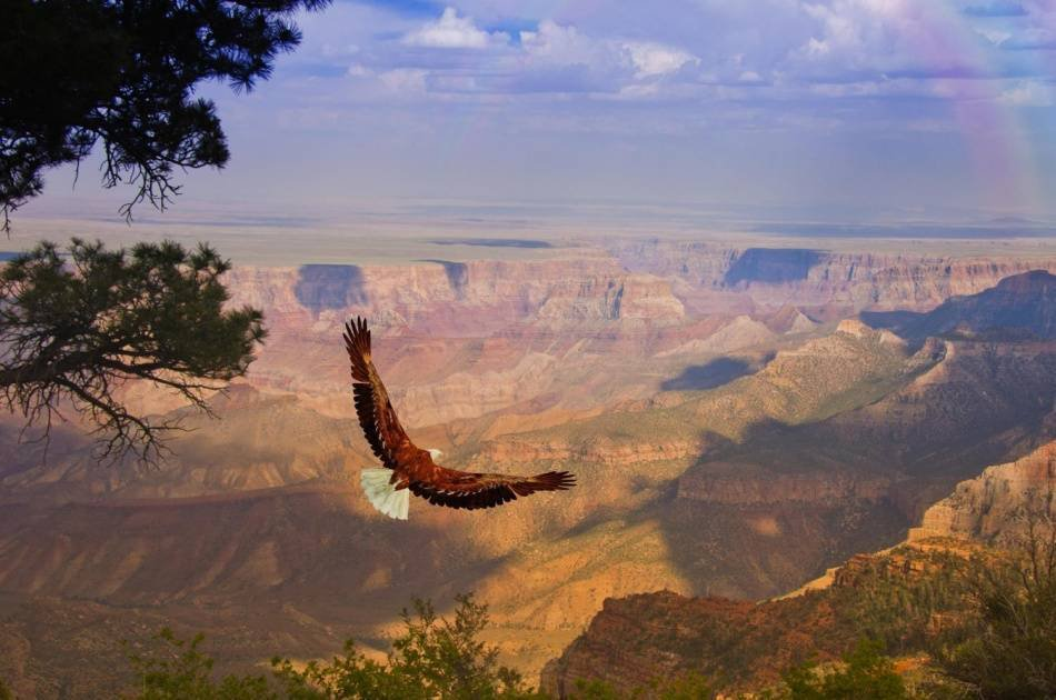 Grand Canyon West Rim Airplane and Ground Combo Tour