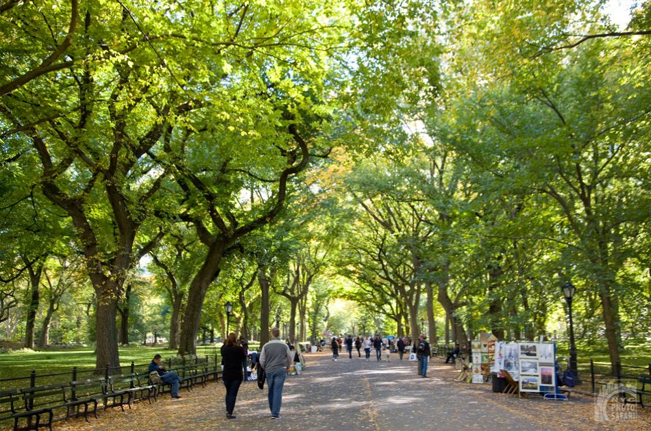 Photo Safari in Central Park