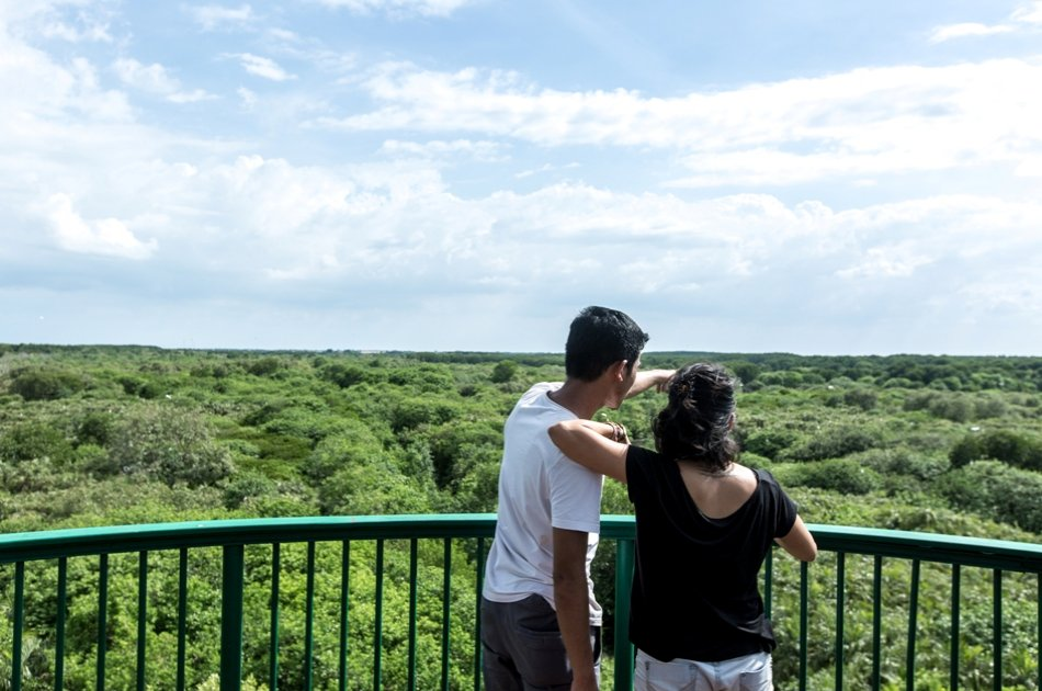 Can Gio Mangrove Forest Private Tour from Ho Chi Minh City