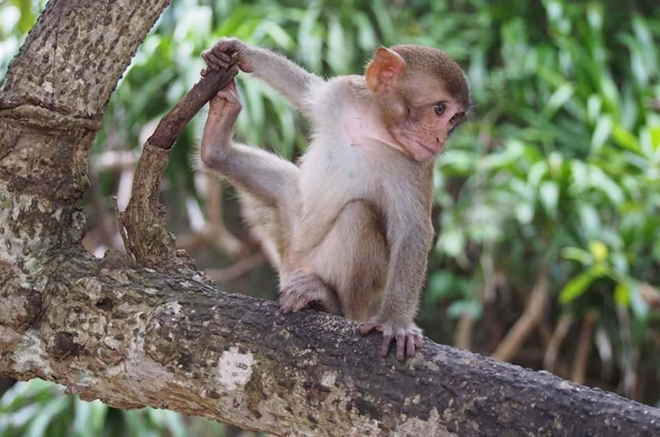 Monkey Island Joining Tour & Relaxing in Nha Phu Bay