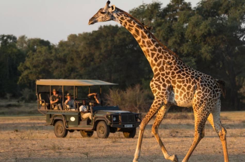 7 Days Best of Zambia Safari – Kafue & South Luangwa National Park