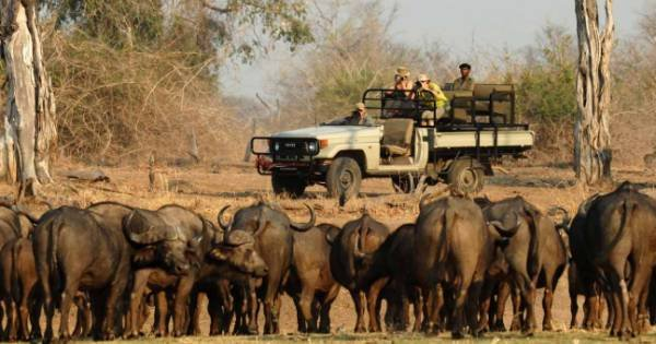 7 Days South Luangwa Affordable Zambia Safari