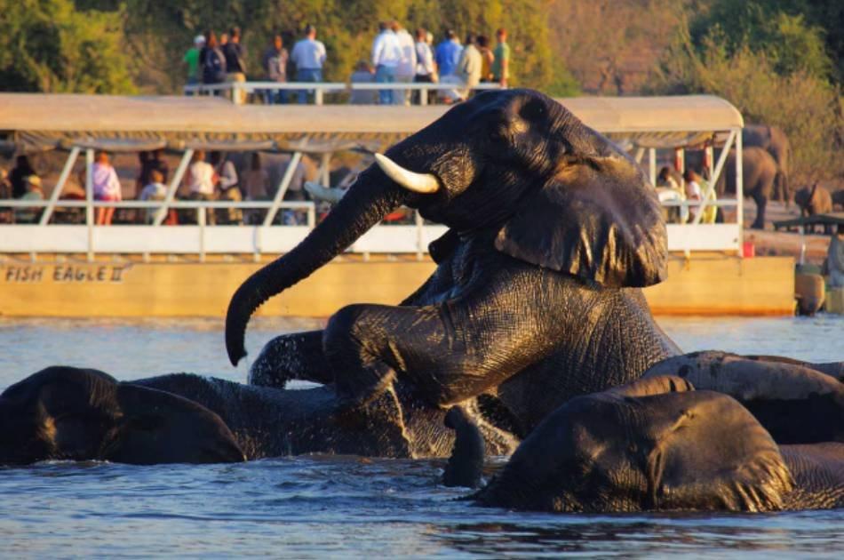 7 Days South Luangwa & Victoria Falls Safari – Zambia