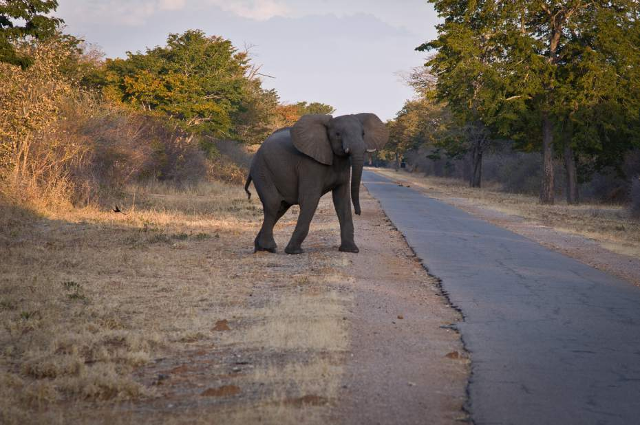 ZIMBABWE GAME TRACKER | the Road Less Travelled
