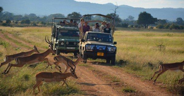Tours of the Wonderful Wilderness in Serengeti