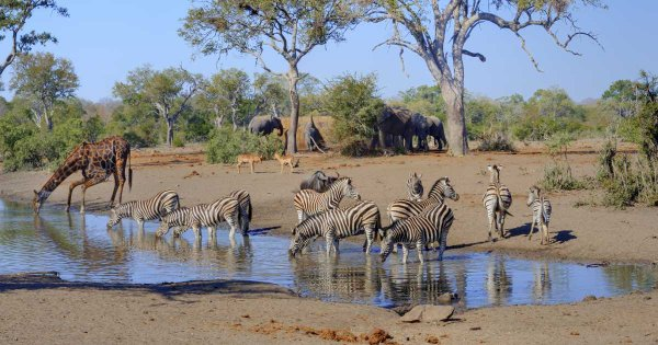 Adventure, Fun and 'game' on a Private Tour of Kruger National Park
