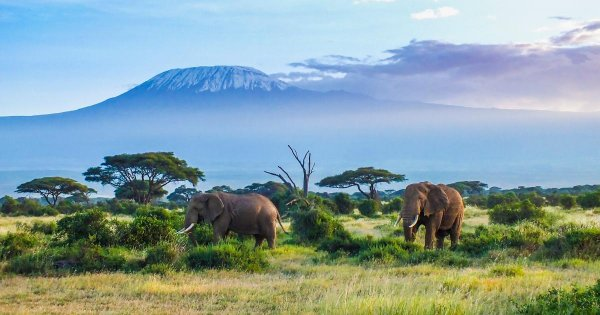 A Private Tour to the Top of Africa Mt Kilimanjaro National Park !