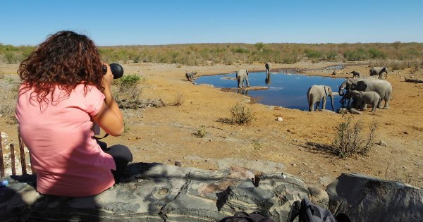 Private Tour of Etosha National Park for Exhilarating, Energetic Safaris