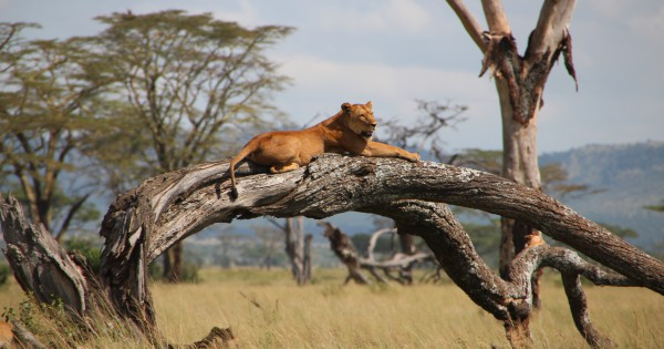 Guided Private Tours of the Wonderful Wilderness in Serengeti