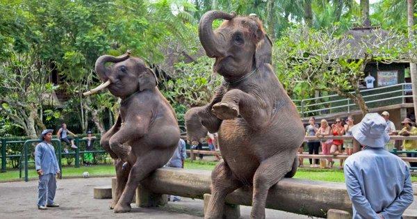 Take a Bali Private Tour to Enjoy a Day on Paradise Island