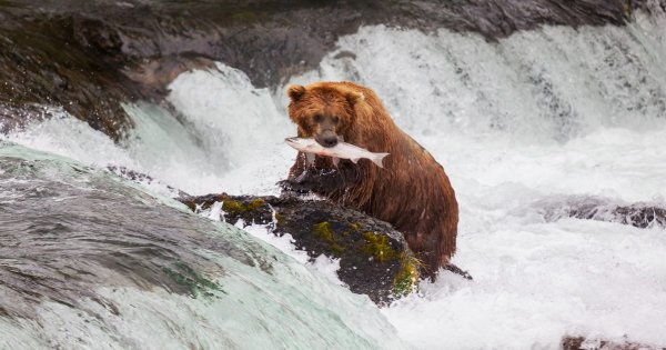 Experience the Stunning and Unique Scenery on an Alaska Private Tour