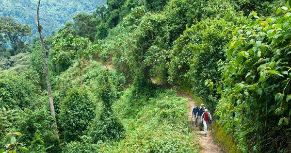Safari Tours in a Natural Wonder of Rwanda, Nyungwe Forest National Park