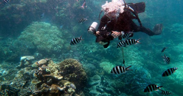 See the Great Barrier Reef or the Gold Cost on a Queensland Private Tour