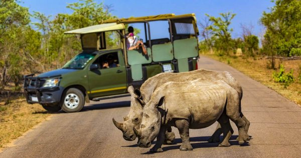 For Thrilling and Memorable Safaris Go on a Private Tour of Mbombela