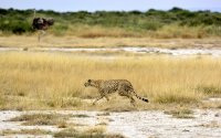 7 Days Safari Arusha Park/Lake Manyara/Serengeti Plains/Ngorongoro Crater/Tarangire Park